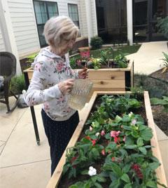 raised planter pic